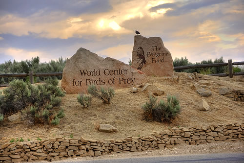 World Center for Birds of Prey in Boise Idaho
